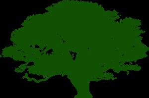 Europalau